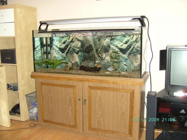 komplett aquarium 240 liter mit 5 roten piranhas 2 welse. Black Bedroom Furniture Sets. Home Design Ideas
