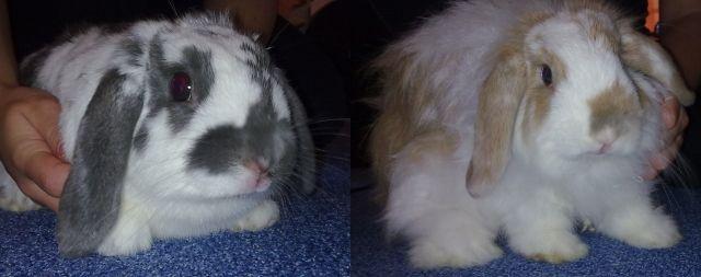 Hasen Kaninchen Kleinanzeigen Hasen Kaninchen Annoncen Hasen
