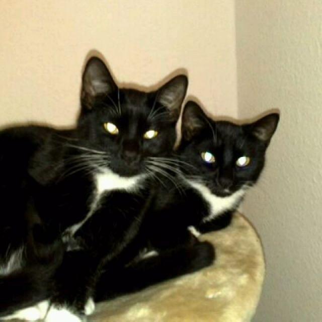 zwei kleine katzen im alter von einem jahr und zwei. Black Bedroom Furniture Sets. Home Design Ideas