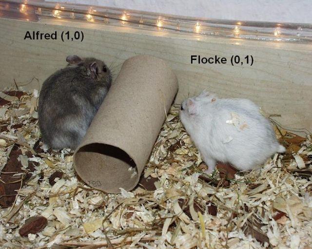 Hamster Kleinanzeigen Hamster Annoncen Hamster Inserate Hamster Anzeigenmarkt Hamster Marktplatz Seite 11